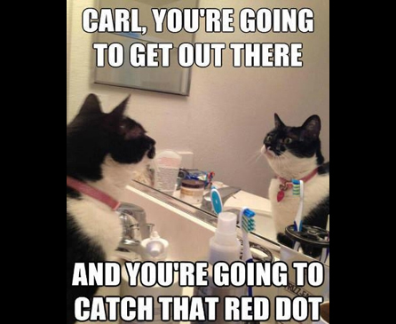 Carl youre going to get out there and youre going to catch that red dot 25 funny cat memes to make you laugh cattime