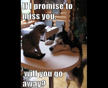 I Ll Miss You Funny Meme : Funny cat memes to make you laugh cattime