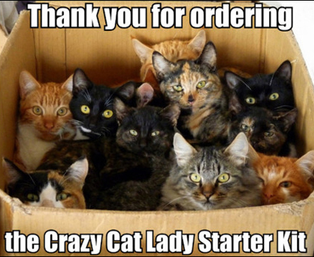 Funny Cat Meme Pictures : Funny cat memes to make you laugh cattime