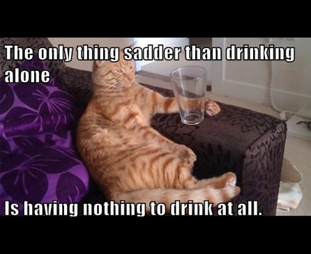 Funny Cat Drinking Meme : Funny cat memes to make you laugh cattime
