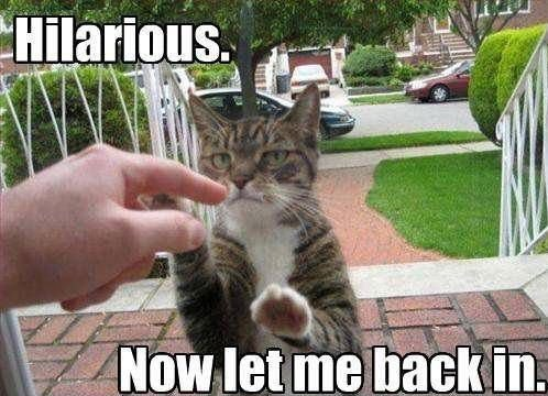 Funny Memes Clean Animals : Funny cat memes that will make you lol