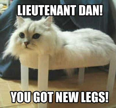 25 Funny Cat Memes That Will Make You Lol