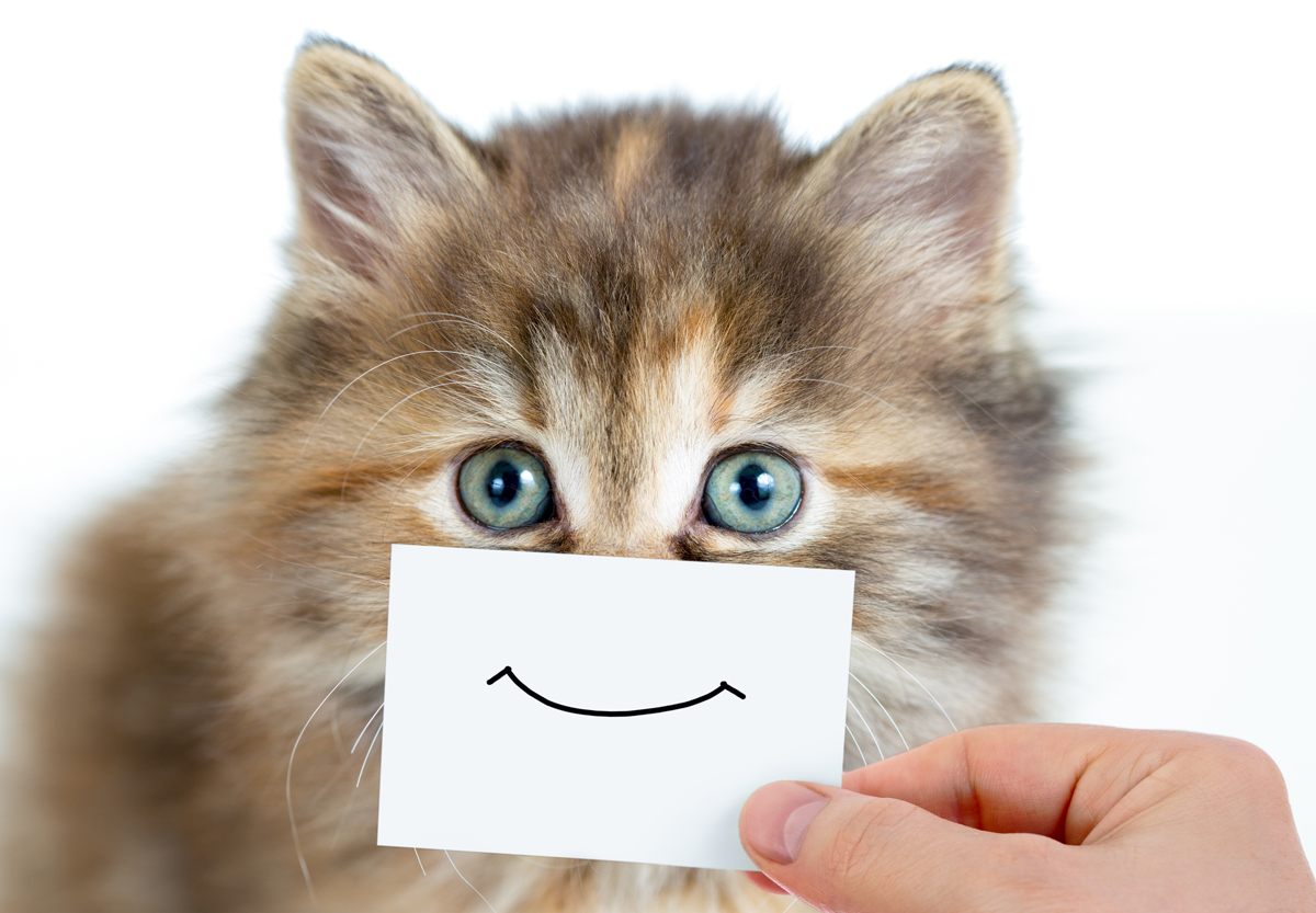 gallery for gt crazy cat happy face