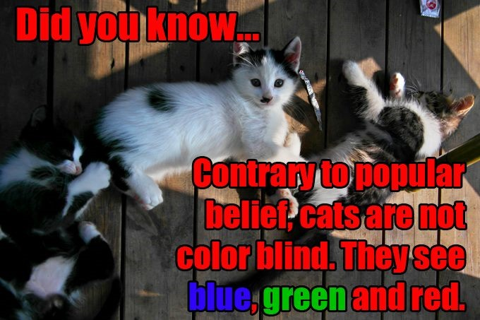 Colorblind Cats