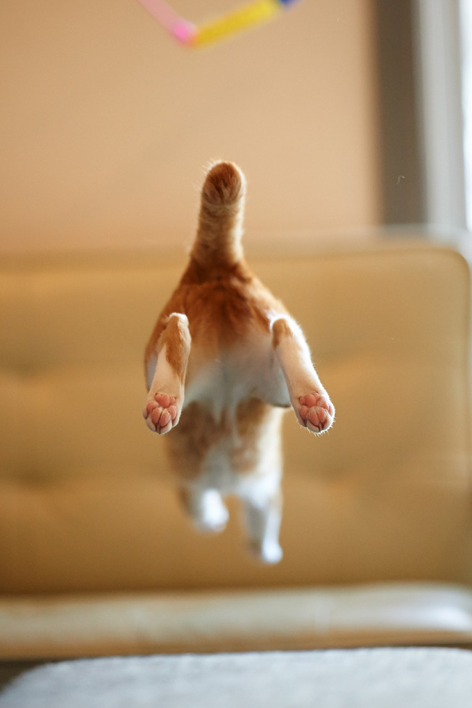 22 Amazing Photographs Of Cats In Flight Picture Gallery