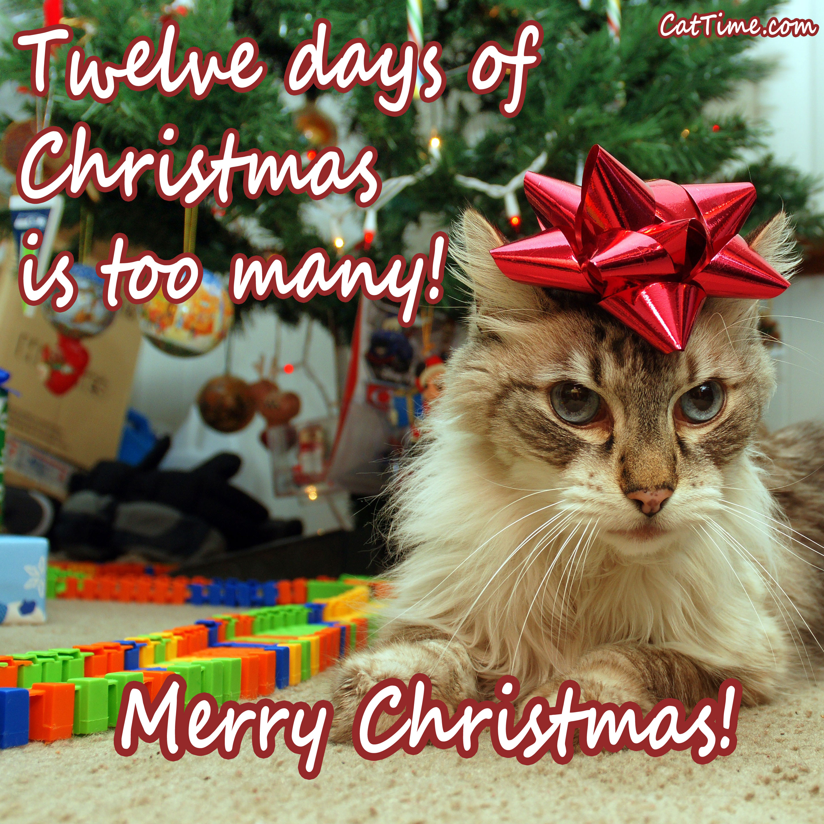 15 Cat Christmas Cards You Can Share With Your Friends And Family ...