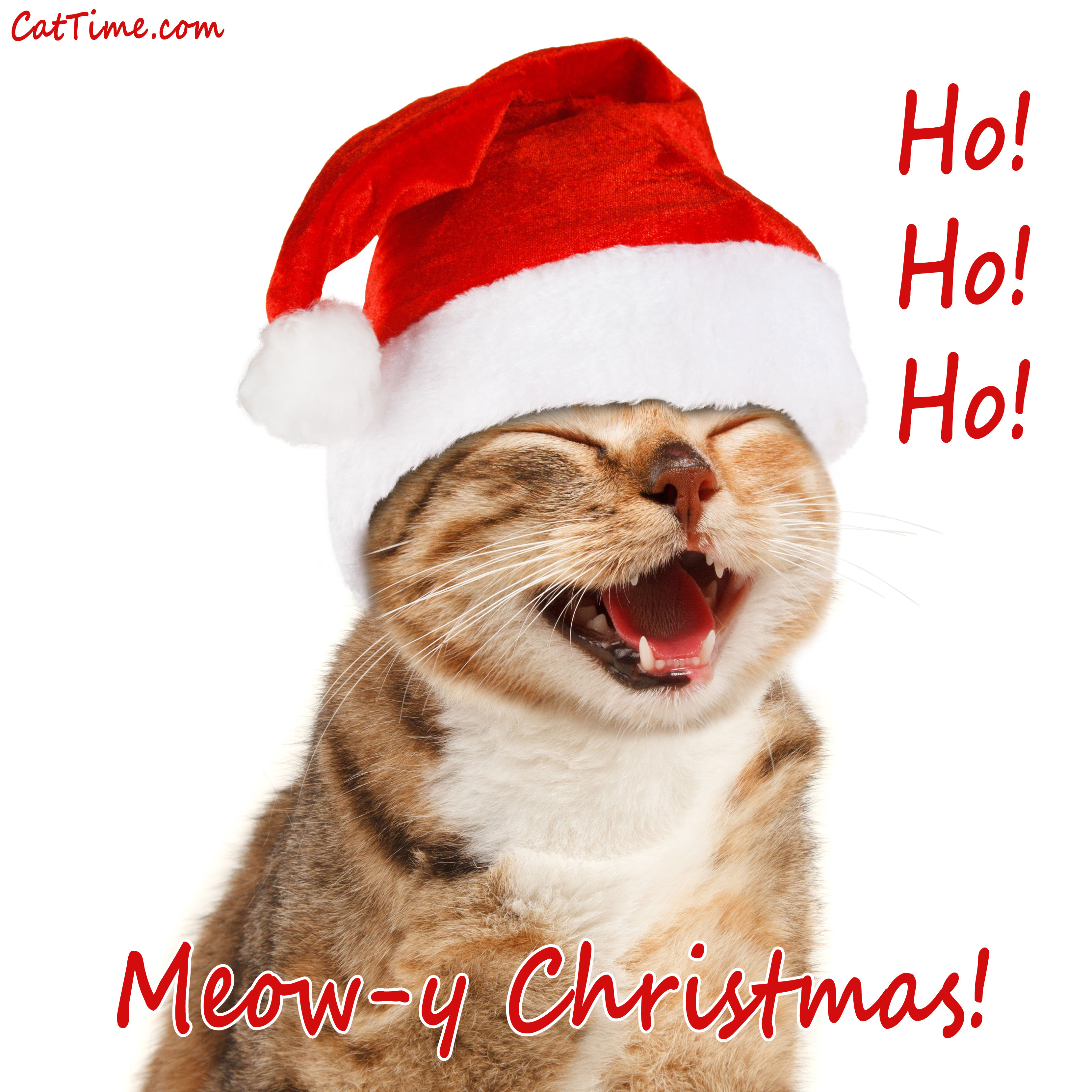 15 Cat Christmas E,Cards You Can Share With Your Friends And