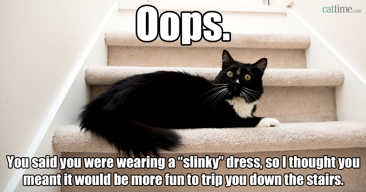 cat meme cat sitting on staircase after tripping owner cat memes 25 ways to laugh cattime