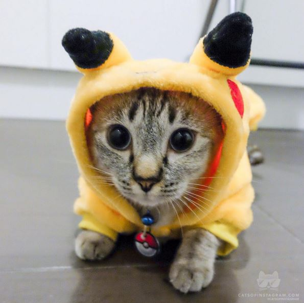 14 kitties dressed up for dress up your pets day cattime