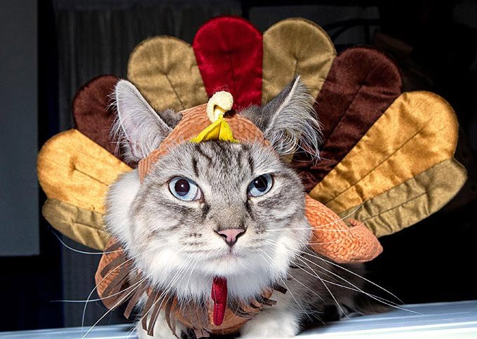 That Kitty Wants To Be A Turkey