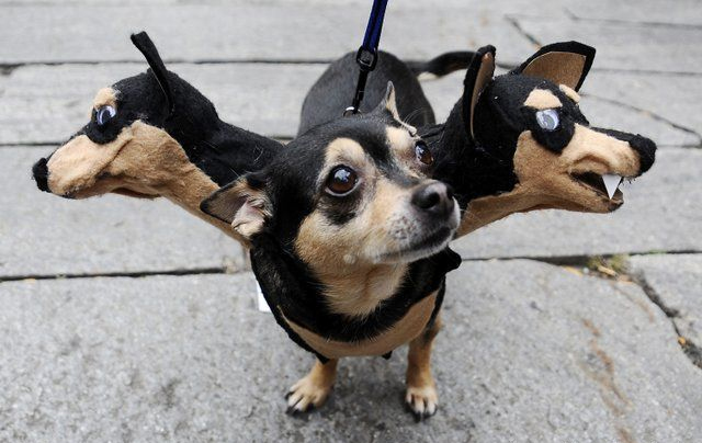 30 Awesome Dog And Cat Halloween Costumes [SLIDESHOW] - CatTime