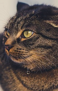 Cat Ears Can Tell You How Your Cat Is Feeling