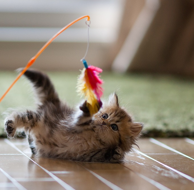Play with the feather thing.
