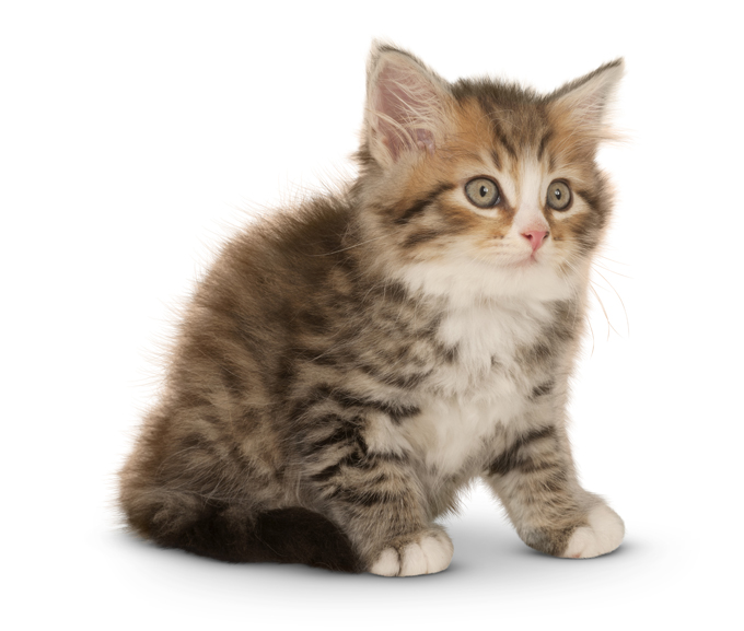 how to choose right cat breed