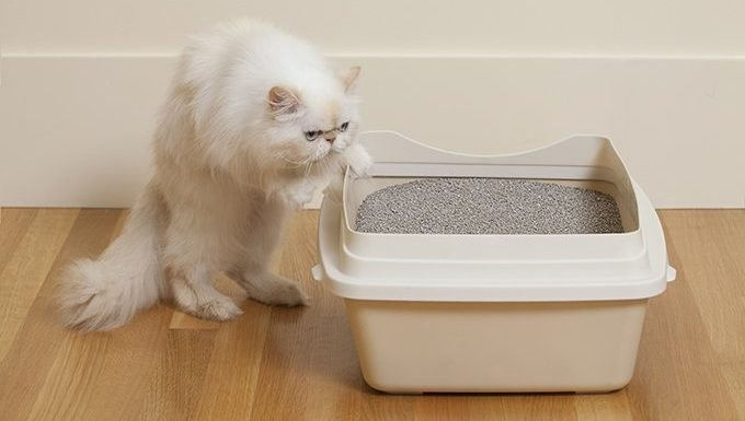 Consider A Litter Box With High Sides